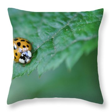 Ladybug Posing On Astilbe Leaf Throw Pillow