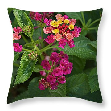 Throw Pillow featuring the photograph Lantana by Joseph Yarbrough