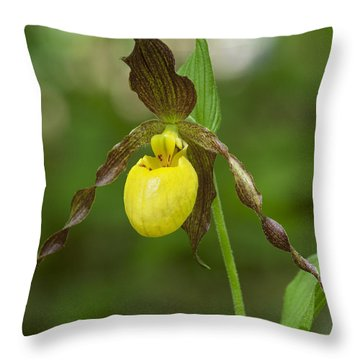 Large Yellow Lady Slipper Orchid Dspf0251 Throw Pillow