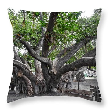 Largest Banyan Tree In The Usa Throw Pillow by Kirsten Giving