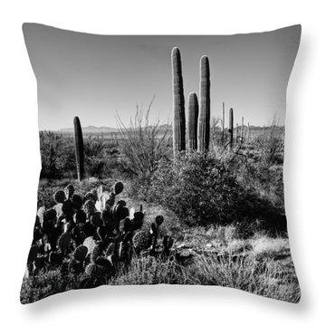 Late Winter Desert Throw Pillow