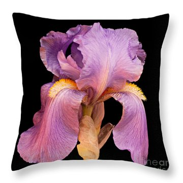 Lavender Beauty Throw Pillow by Andee Design