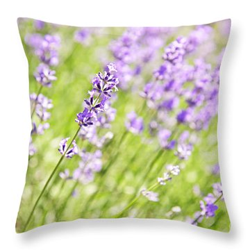 Lavender Blooming In A Garden Throw Pillow by Elena Elisseeva