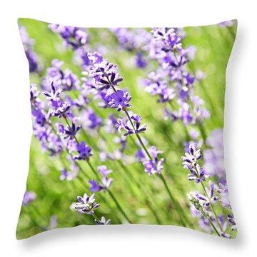 Lavender In Sunshine Throw Pillow by Elena Elisseeva