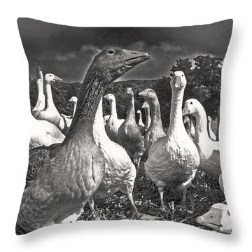 Throw Pillow featuring the photograph Leader Of The Pack by William Fields