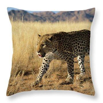Leopard Panthera Pardus Walking, Africa Throw Pillow by Winfried Wisniewski