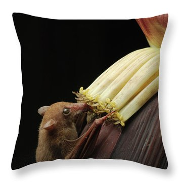 Lesser Long-tongued Fruit Bat Throw Pillow by Ch'ien Lee