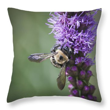 Liatris And Bee Squared 1 Throw Pillow