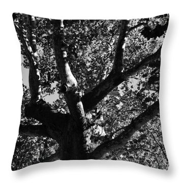 Throw Pillow featuring the photograph Light And Dark by Brian Hughes