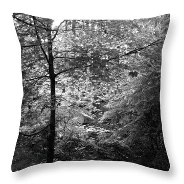Light In The Woods Throw Pillow by Kathleen Grace