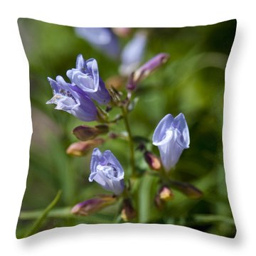 Light Purple Wild Penstemons  Throw Pillow by Paul Cannon