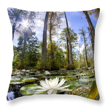 Lily Pad Flower In Cypress Swamp Forest Throw Pillow by Dustin K Ryan