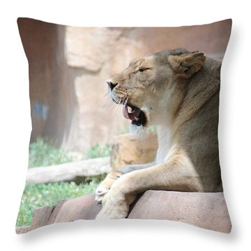Lion At Brookfield Zoo In Chicago Il Throw Pillow