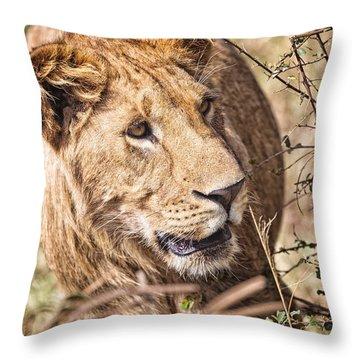 Lioness Hiding Throw Pillow