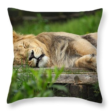 Lioness Sleeping Throw Pillow