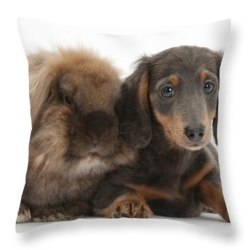 Lionhead-cross Rabbit And Dachshund Pup Throw Pillow by Mark Taylor