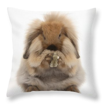 Lionhead X Lop Rabbit Grooming Throw Pillow by Mark Taylor
