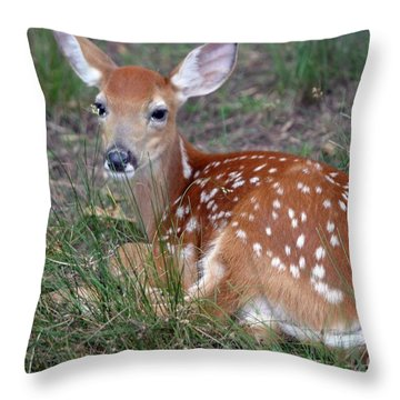 Little Bambi Throw Pillow by Living Color Photography Lorraine Lynch