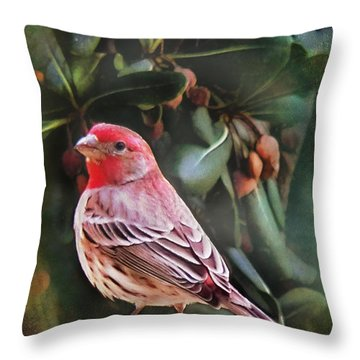 Little Bird Iv Throw Pillow