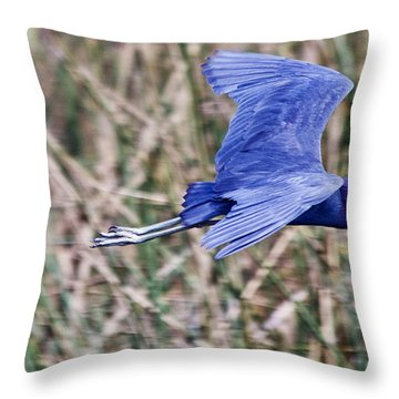Little Blue Heron In Flight Throw Pillow by Roger Wedegis
