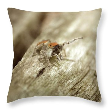 Throw Pillow featuring the photograph Little Jumper In Sepia by JD Grimes