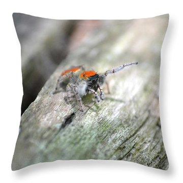 Throw Pillow featuring the photograph Little Jumper by JD Grimes