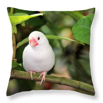 Little White Bird Throw Pillow by Rosalie Scanlon