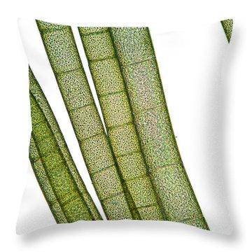 Lm Of Tubular Algae Throw Pillow by Raul Gonzalez Perez