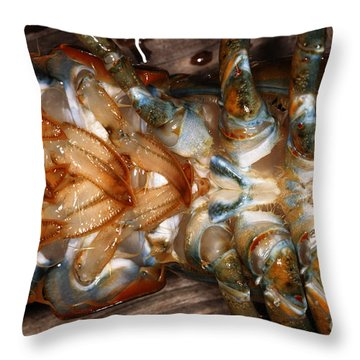 Lobster Female Sex Organs Throw Pillow by Ted Kinsman