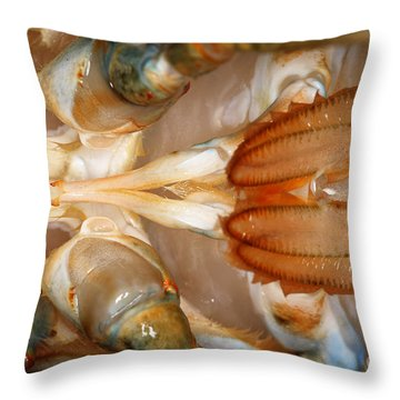 Lobster Male Sex Organs Throw Pillow by Ted Kinsman
