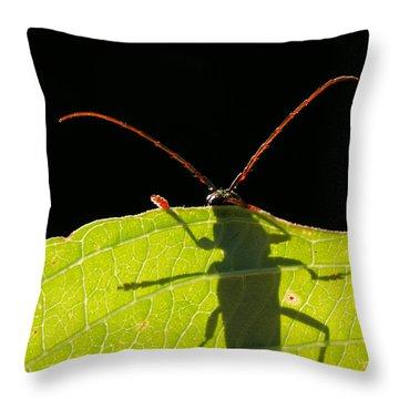 Locust Borer Throw Pillow by Mircea Costina Photography