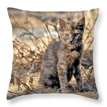 Lone Feral Kitten Throw Pillow