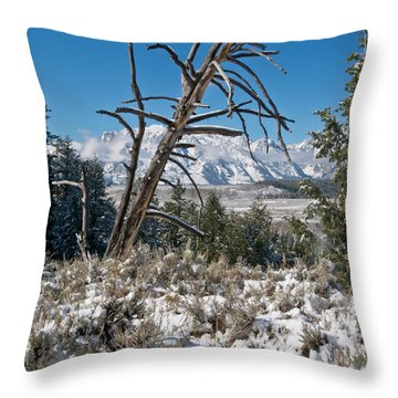 Lonesome Pine Throw Pillow by Jay Seeley