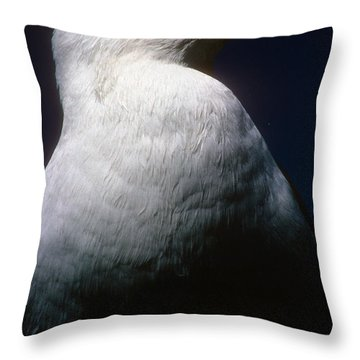 Long Island Seagull Throw Pillow by Mark Gilman