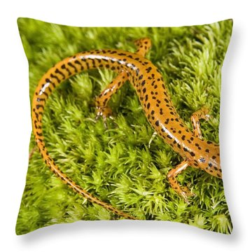 Longtail Salamander Eurycea Longicauda Throw Pillow by Jack Goldfarb