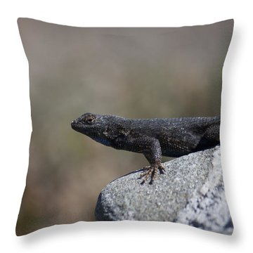 Throw Pillow featuring the photograph Look At Me by Ivete Basso Photography