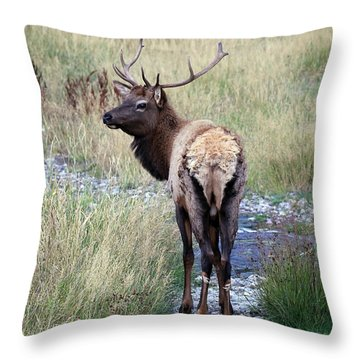 Looking Back Bull Throw Pillow by Steve McKinzie