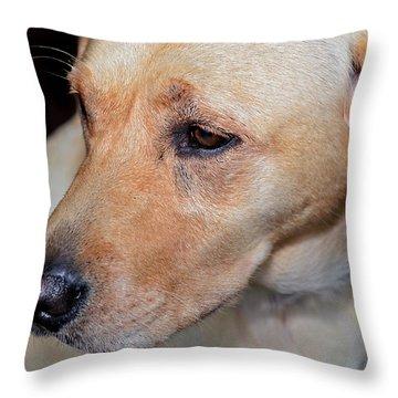 Looking Back Throw Pillow by Susan Leggett