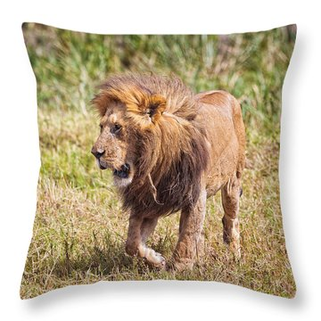 Looking For A Partner Throw Pillow