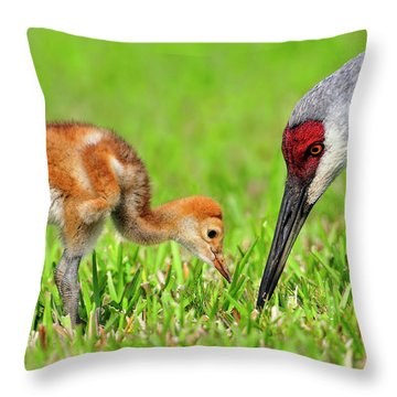 Looking For Bugs Throw Pillow