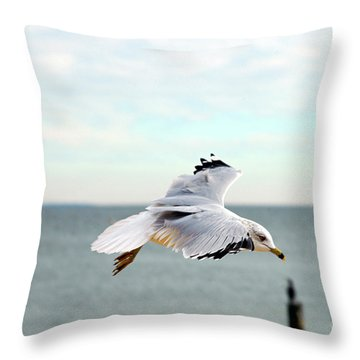 Throw Pillow featuring the photograph Looking For Dinner by Clayton Bruster