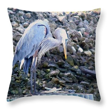 Looking For Lunch Throw Pillow by Marilyn Holkham
