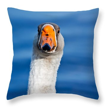 Looking Straight Ahead Throw Pillow by Ann Murphy
