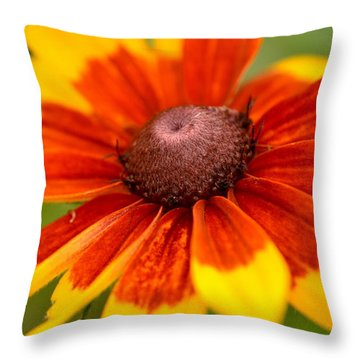 Throw Pillow featuring the photograph Looking Susan In The Eye by JD Grimes