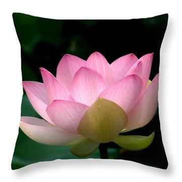 Lotus Beauty--blushing Dl003 Throw Pillow