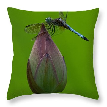 Lotus Bud And Blue Dasher Dragonfly Dl007 Throw Pillow