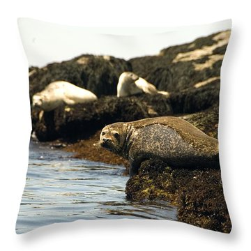 Lounging Seals Throw Pillow