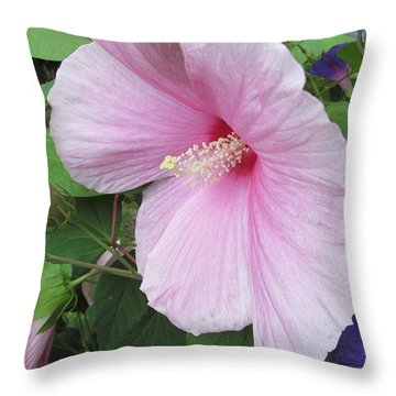 Throw Pillow featuring the photograph Lovely Soft Pink Hibiscus by Tina M Wenger