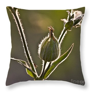 Luminous Halo Throw Pillow by Heiko Koehrer-Wagner