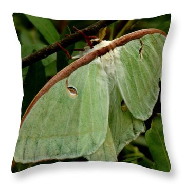 Luna Moth Throw Pillow by Bruce W Krucke